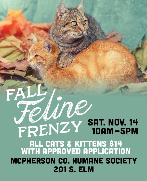 MCHS Fall Feline Frenzy-04